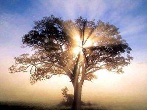 arbre enluminé